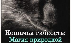 koshachya-gibkost